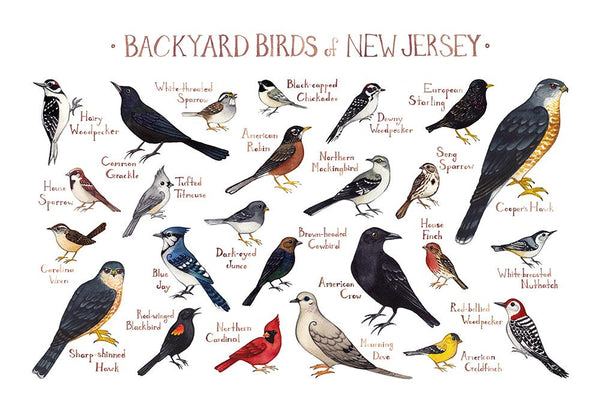 Wholesale Backyard Birds Field Guide Art Print: New Jersey