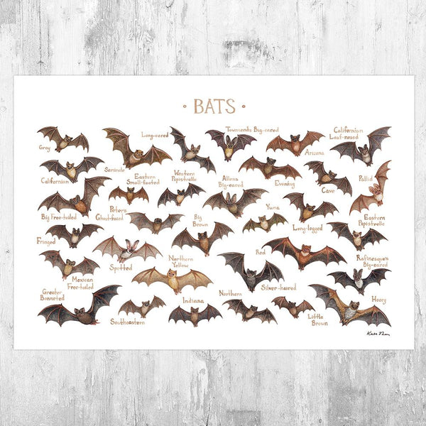 Wholesale Field Guide Art Print: Bats of North America