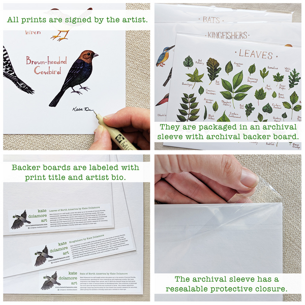 Wholesale Field Guide Art Print: Hawaii Endemic Forest Birds