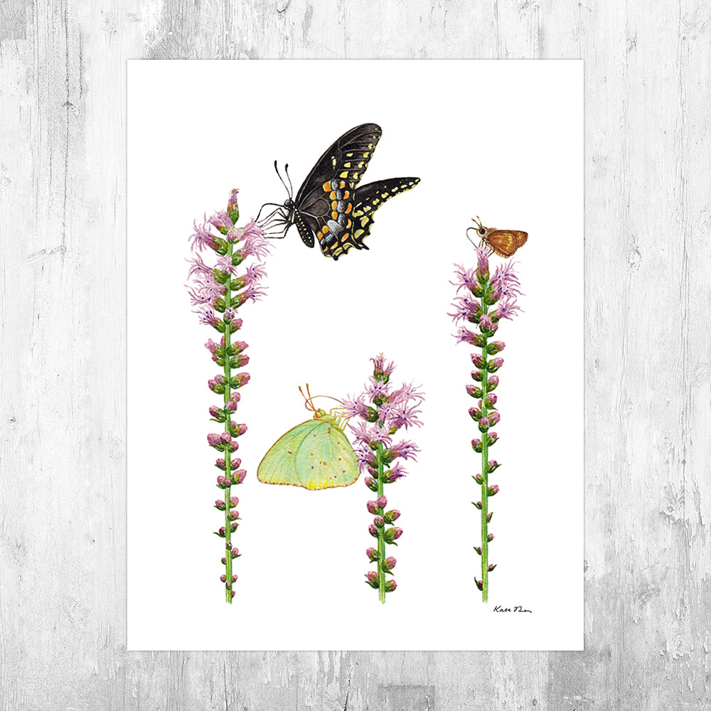 Wholesale Art Print: Butterflies on Blazing Star Wildflowers