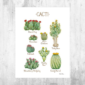 Wholesale Field Guide Art Print: Cacti