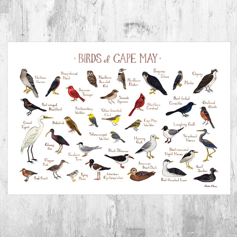 Wholesale Field Guide Art Print: Cape May Birds