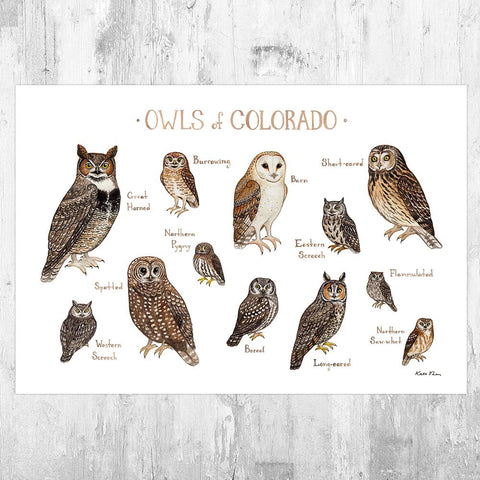 Wholesale Owls Field Guide Art Print: Colorado