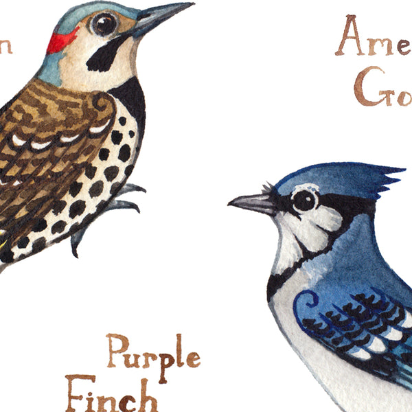Wholesale Backyard Birds Field Guide Art Print: Connecticut