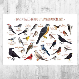 Wholesale Backyard Birds Field Guide Art Print: Washington, D.C.