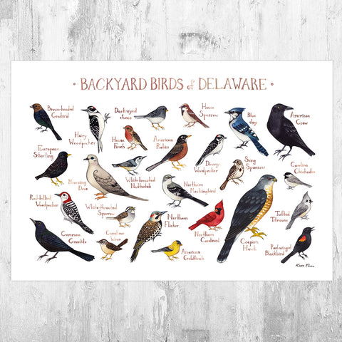 Wholesale Backyard Birds Field Guide Art Print: Florida