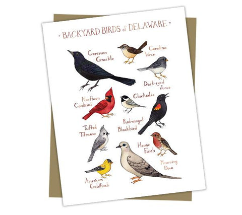 Wholesale Backyard Birds Field Guide Cards: Delaware