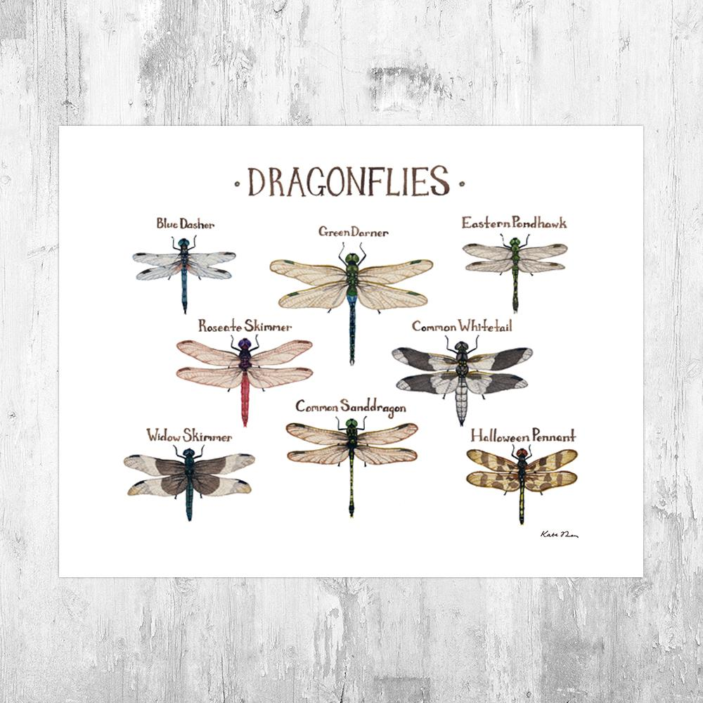 Wholesale Field Guide Art Print: Dragonflies