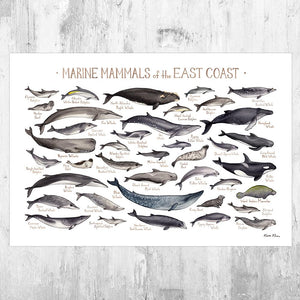 Wholesale Marine Mammals Field Guide Art Print: East Coast