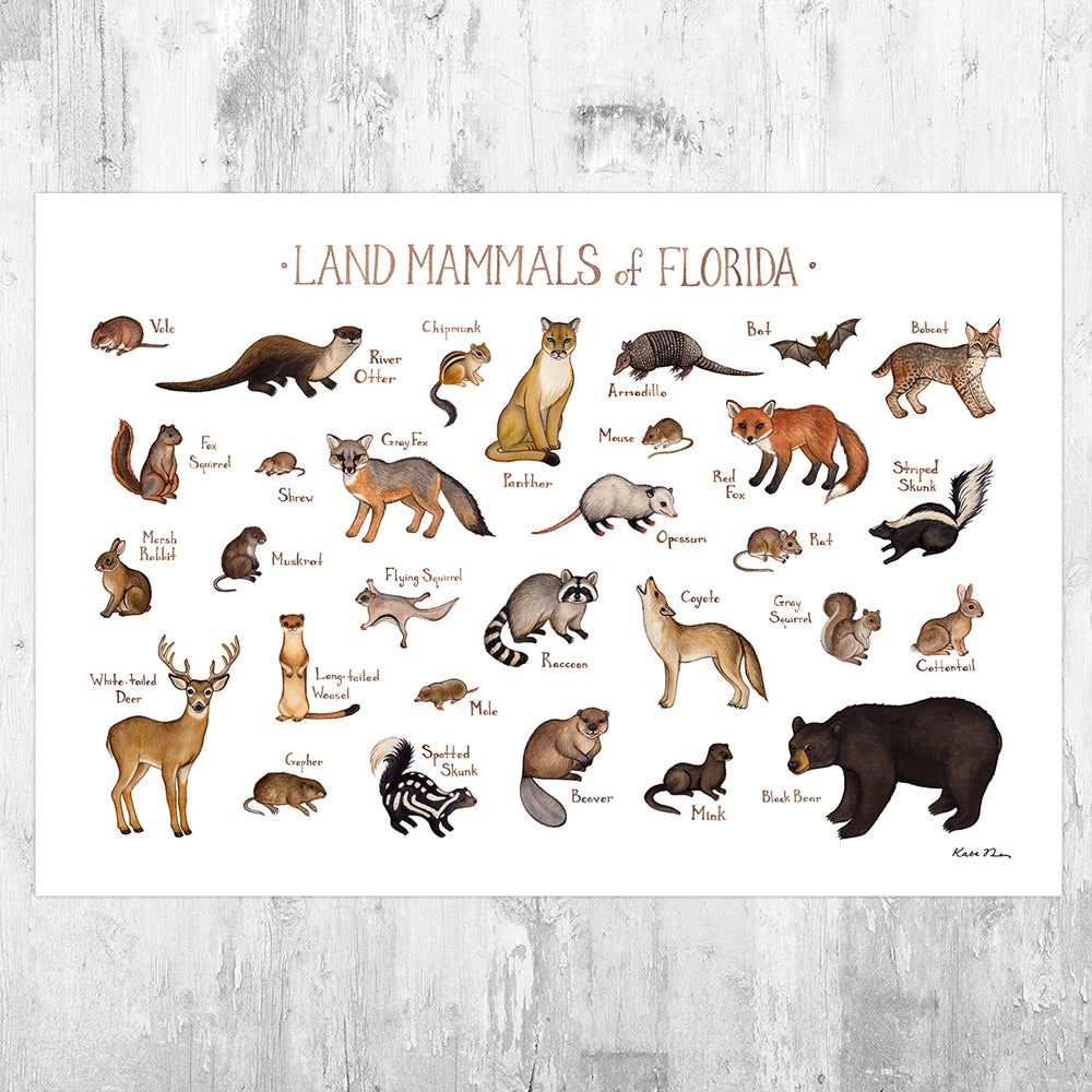 Wholesale Mammals Field Guide Art Print: Florida
