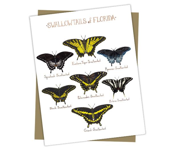 Wholesale Butterflies Field Guide Cards: Florida Swallowtails