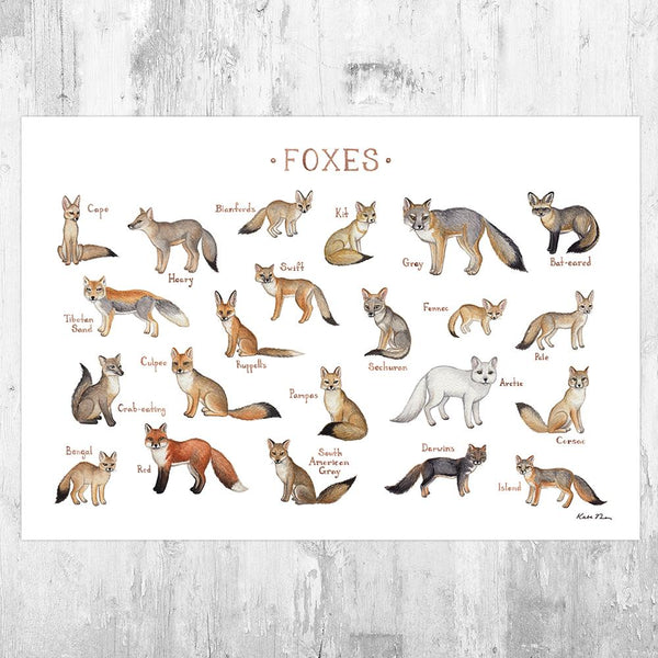 Wholesale Field Guide Art Print: Foxes of the World