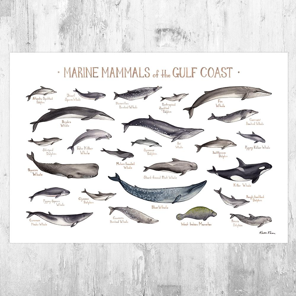 Wholesale Marine Mammals Field Guide Art Print: Gulf Coast