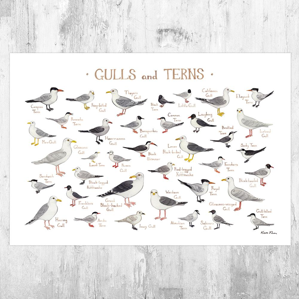 Wholesale Field Guide Art Print: Gulls and Terns of North America