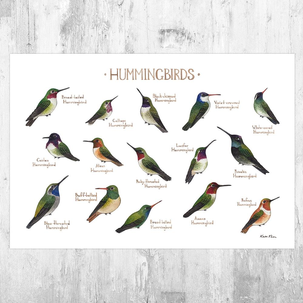 Wholesale Field Guide Art Print: Hummingbirds of North America