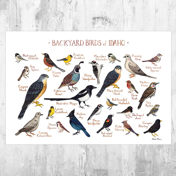 Wholesale Backyard Birds Field Guide Art Print: Idaho