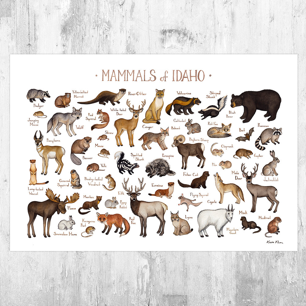 Wholesale Mammals Field Guide Art Print: Idaho