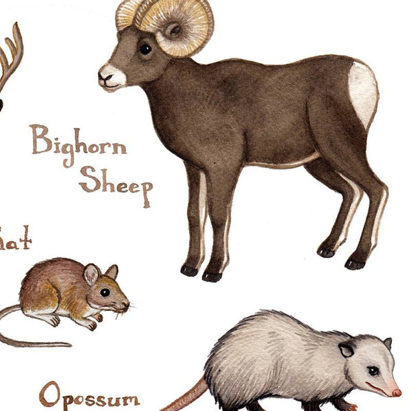 Wholesale Mammals Field Guide Art Print: South Dakota