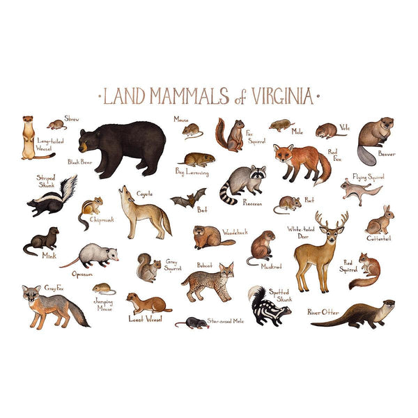 Wholesale Mammals Field Guide Art Print: Virginia