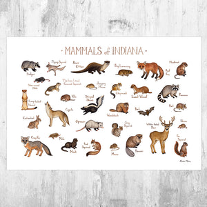 Wholesale Mammals Field Guide Art Print: Indiana
