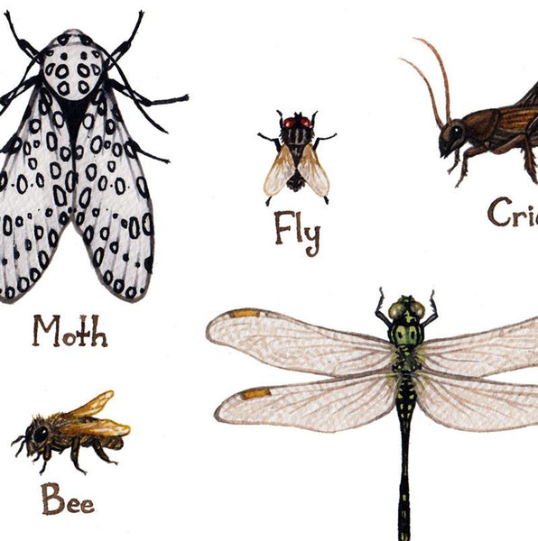 Insects Field Guide Art Print