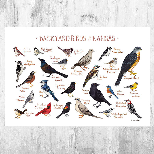 Wholesale Backyard Birds Field Guide Art Print: Kansas