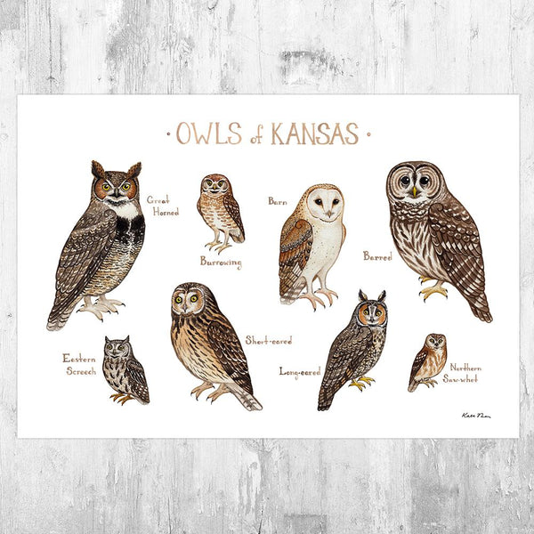 Wholesale Owls Field Guide Art Print: Kansas