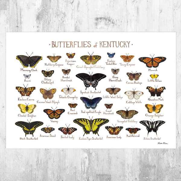 Wholesale Butterflies Field Guide Art Print: Kentucky