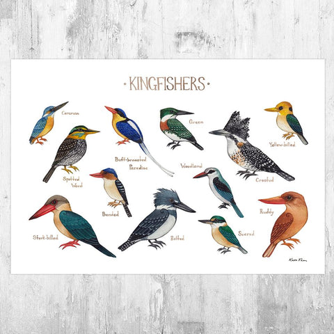 Wholesale Field Guide Art Print: Kingfishers