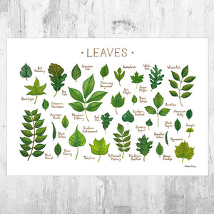 Wholesale Field Guide Art Print: Leaves of North American Trees