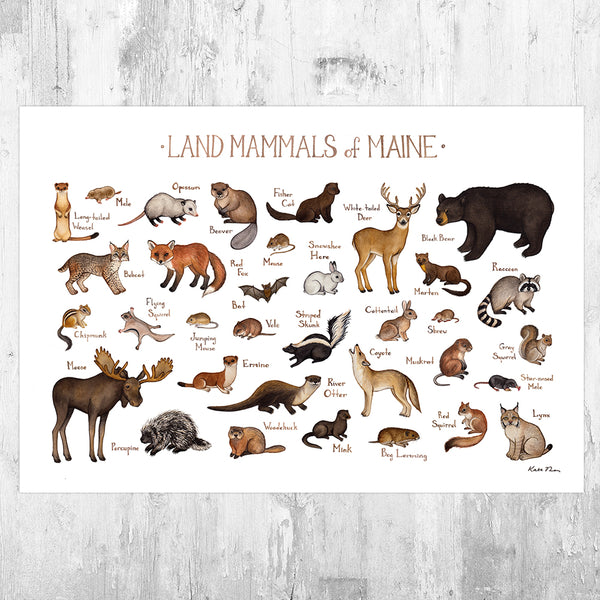 Wholesale Mammals Field Guide Art Print: Maine