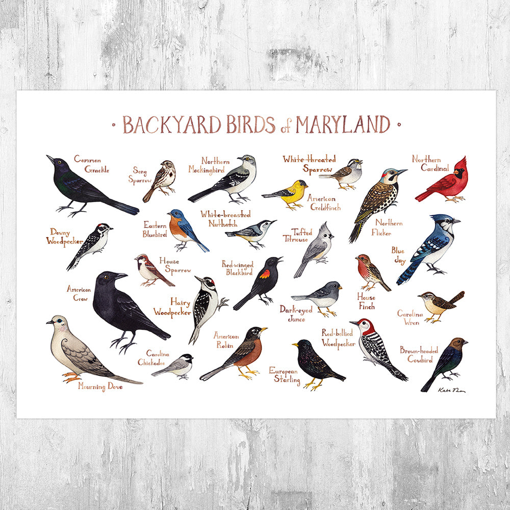 Wholesale Backyard Birds Field Guide Art Print: Maryland