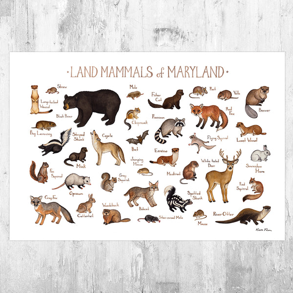 Wholesale Mammals Field Guide Art Print: Maryland