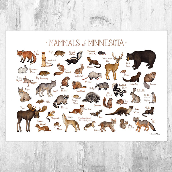 Wholesale Mammals Field Guide Art Print: Minnesota