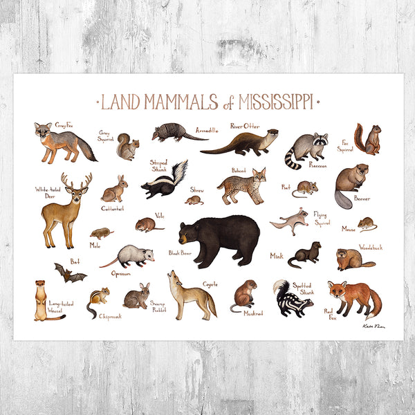 Wholesale Mammals Field Guide Art Print: Mississippi