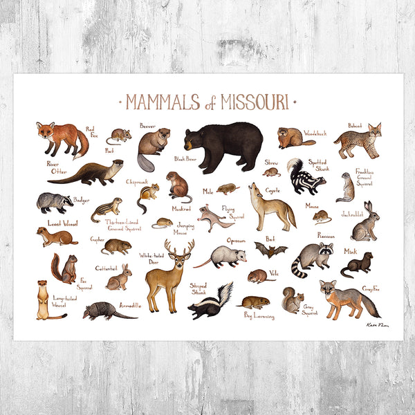 Wholesale Mammals Field Guide Art Print: Missouri