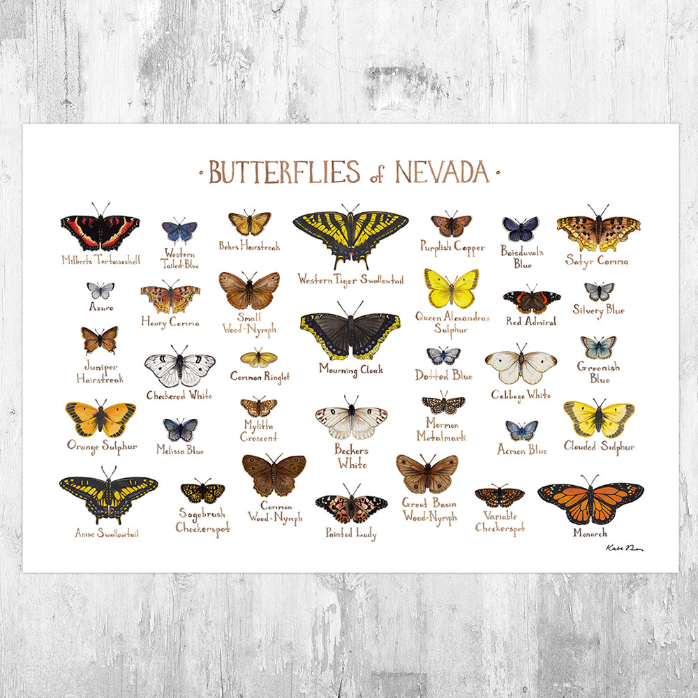 Wholesale Butterflies Field Guide Art Print: Nevada