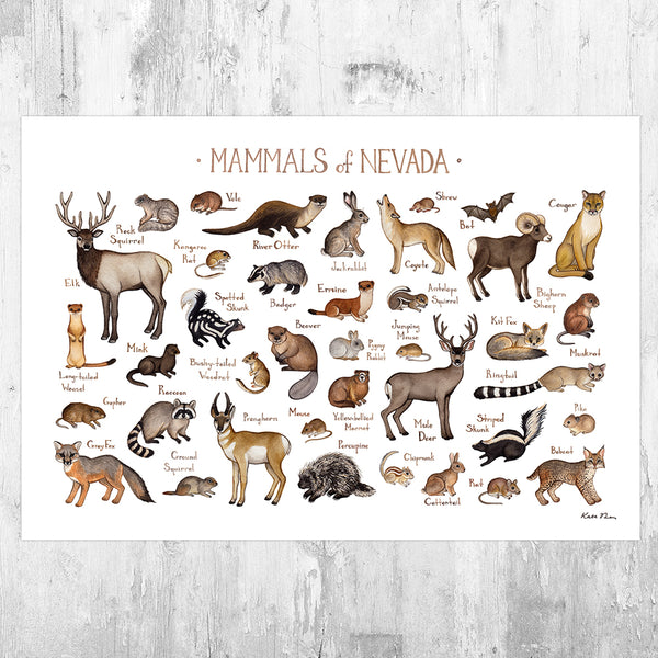 Wholesale Mammals Field Guide Art Print: Nevada