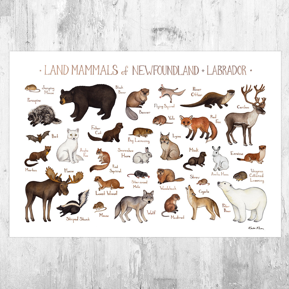 Wholesale Mammals Field Guide Art Print: Newfoundland & Labrador