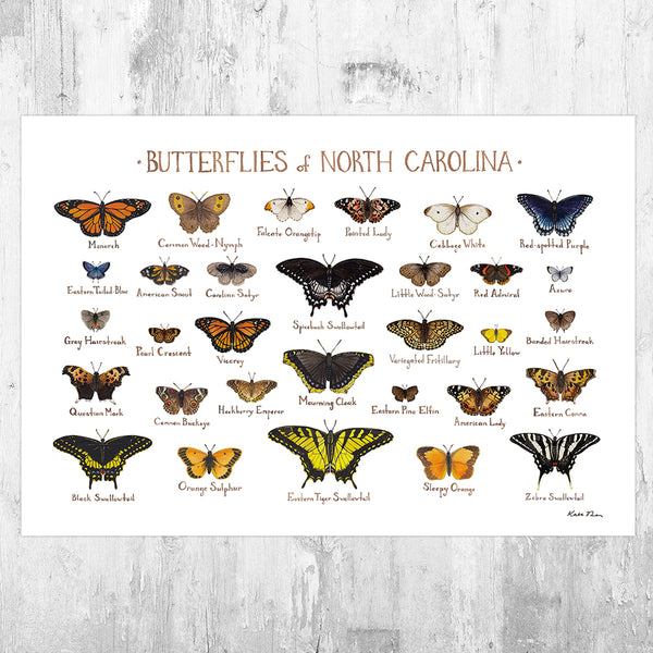 Wholesale Butterflies Field Guide Art Print: North Carolina