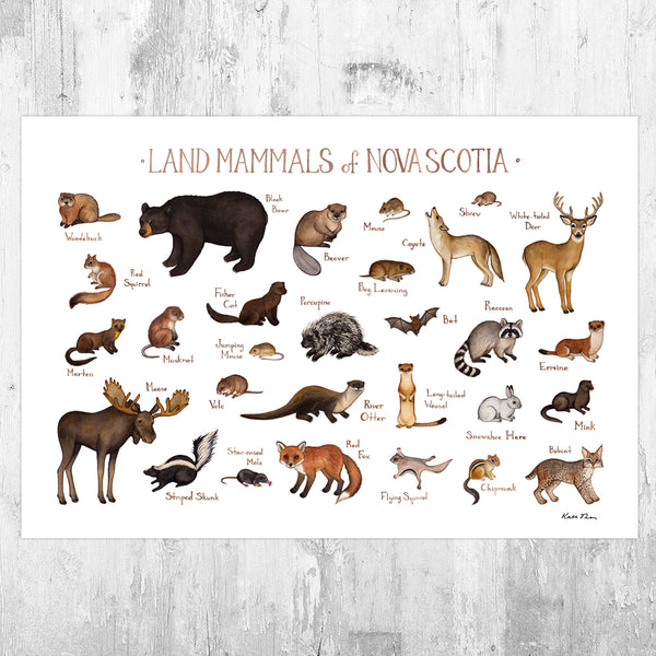 Wholesale Mammals Field Guide Art Print: Nova Scotia