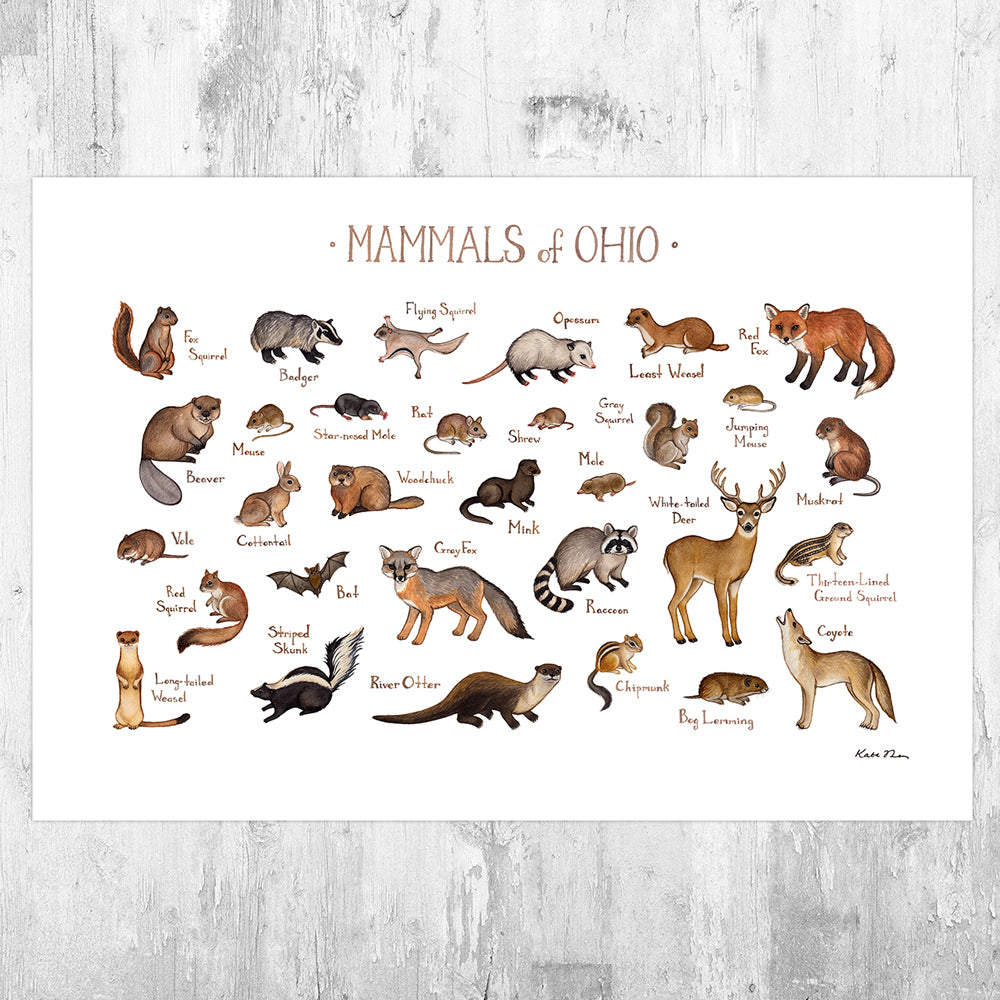 Wholesale Mammals Field Guide Art Print: Ohio