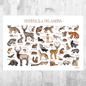 Wholesale Mammals Field Guide Art Print: Oklahoma