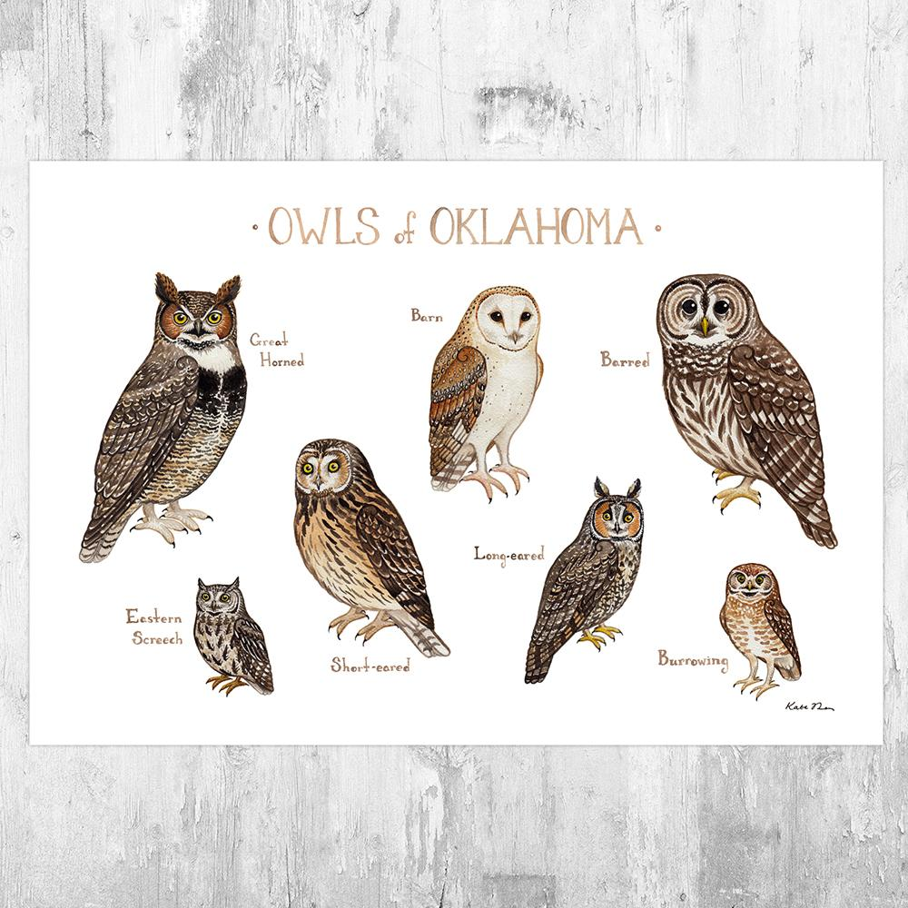 Wholesale Owls Field Guide Art Print: Oklahoma