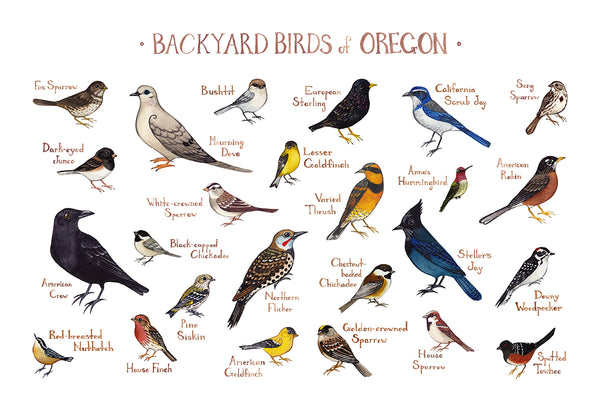 Wholesale Backyard Birds Field Guide Art Print: Oregon