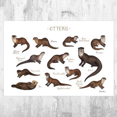 Wholesale Field Guide Art Print: Otters of the World