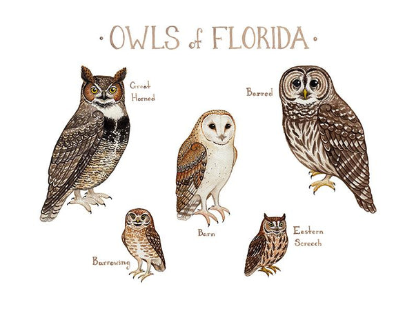 Wholesale Owls Field Guide Art Print: Florida