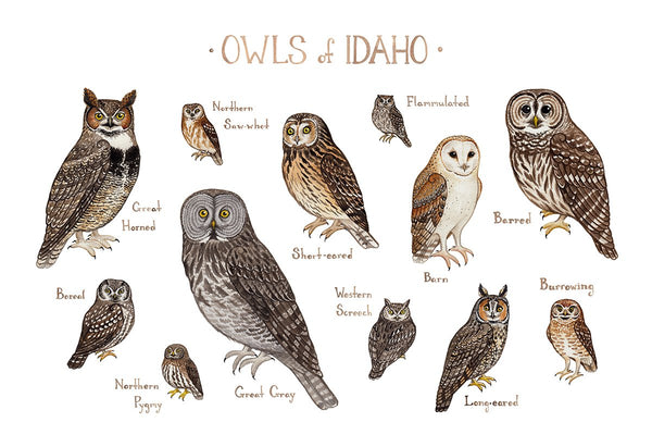 Wholesale Owls Field Guide Art Print: Idaho