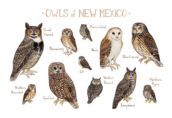 Wholesale Owls Field Guide Art Print: New Mexico