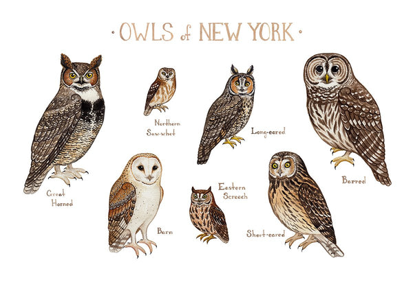 Wholesale Owls Field Guide Art Print: New York